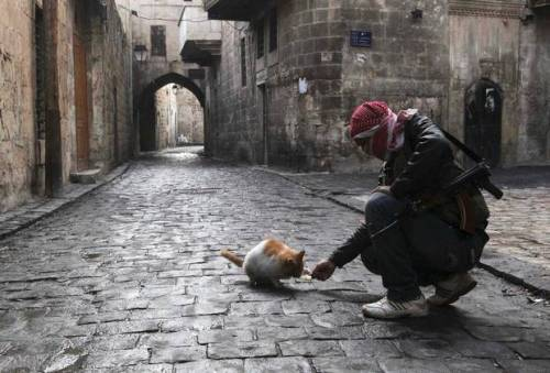 simply-war:  A Free Syrian Army fighter feeds a cat in the old city of Aleppo, Syria. (MUZAFFAR SALMAN /REUTERS)