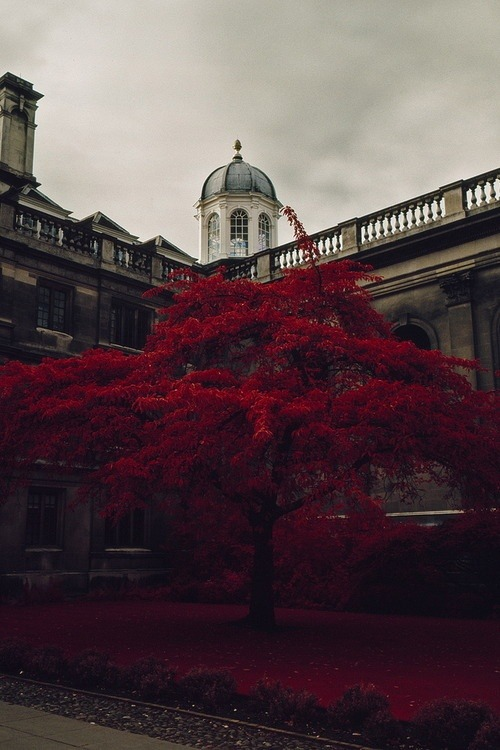 Red, Cambridge, England photo via elde