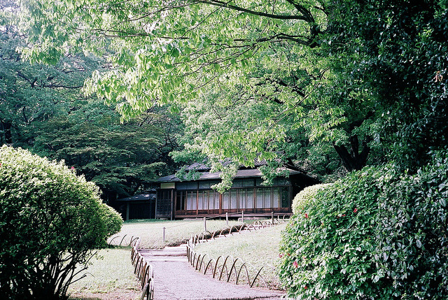 Klasse_S_20110502_Meiji_Shrine_16 by Jun Takeuchi on Flickr.