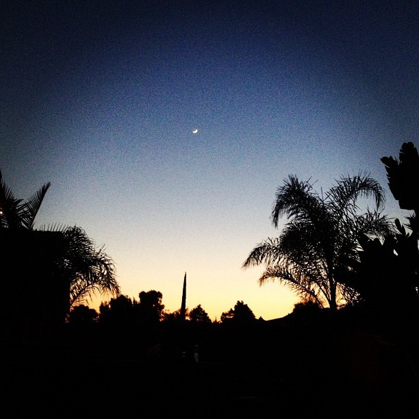 Summer Nights | 👌🌙☀💙 #countingdownthedays