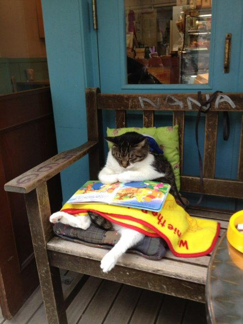 collegehumor:  Cat Just Kicking Back, Reading Children's Book Get this cat a cradle.