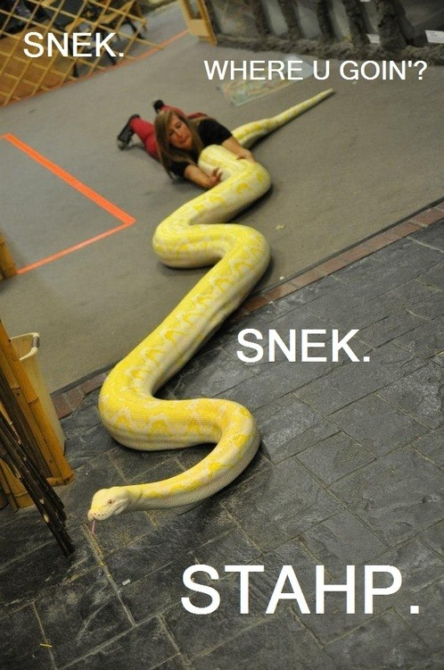 snake-lovers:  wild-guy:  morelia-viridis:  smugsmoke:  OH MY LOL  This photo is better with the caption added. :3  I wannna cuddle him! *___*  So cute! :.D