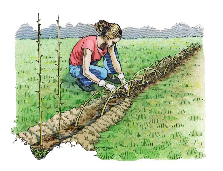 motherearthnewsmag:  Living Fences: How-To, Advantages and Tips Sustainable living fences can hold animals, protect soil, provide livestock fodder, offer food or compost, and will last generations.  By Harvey Ussery
