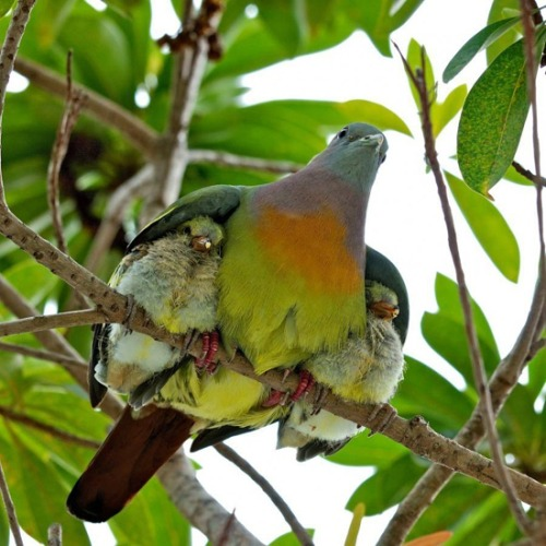 awwww-cute:  Tenderness and love of mother
