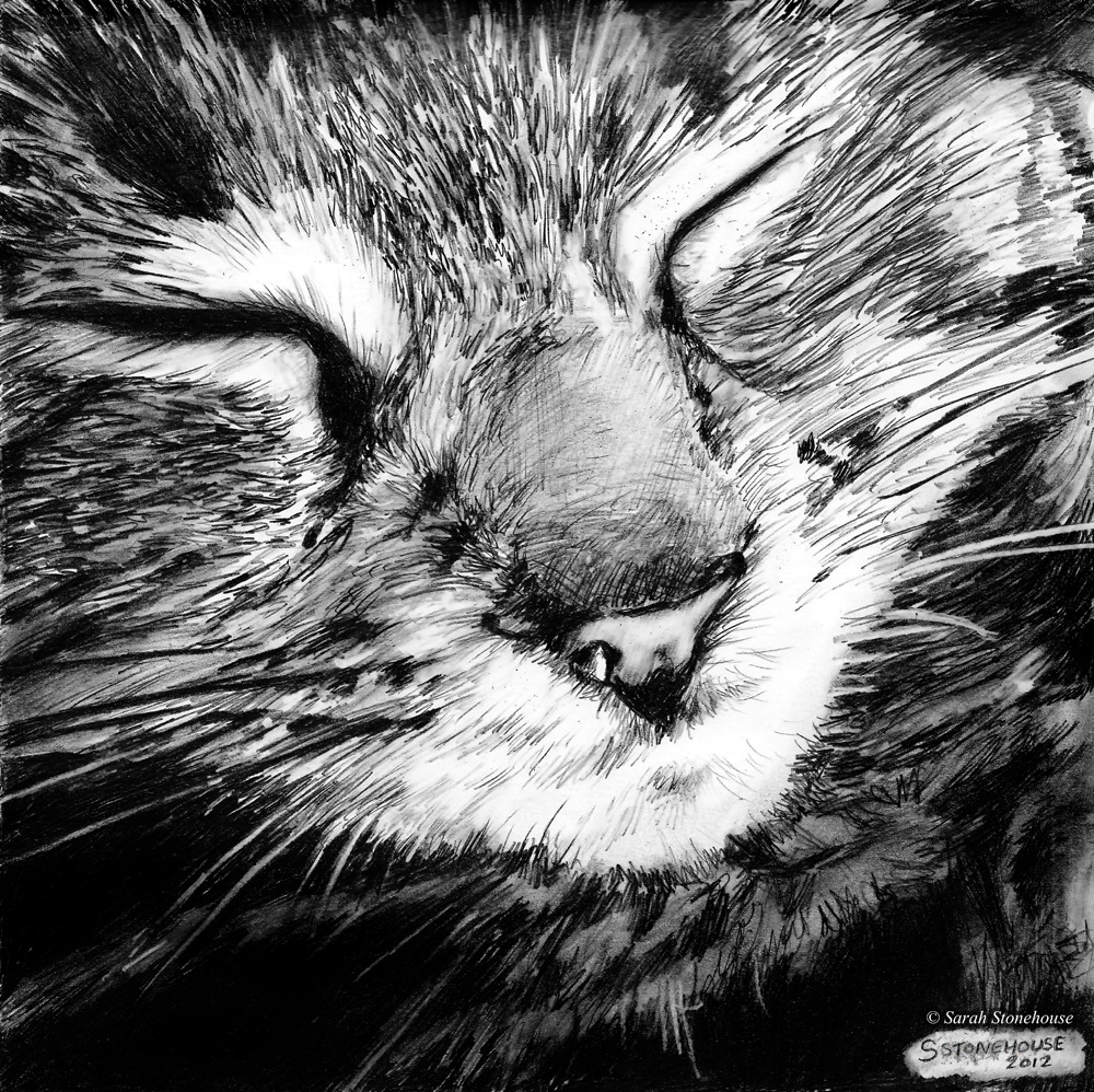 Mia (Piddles)Small graphite drawing of our new kittenMechanical PencilsApprox 2 hours takenDecember 2012Drawn by Sarah Stonehouse (http://mydustlandfairytale.tumblr.com)
