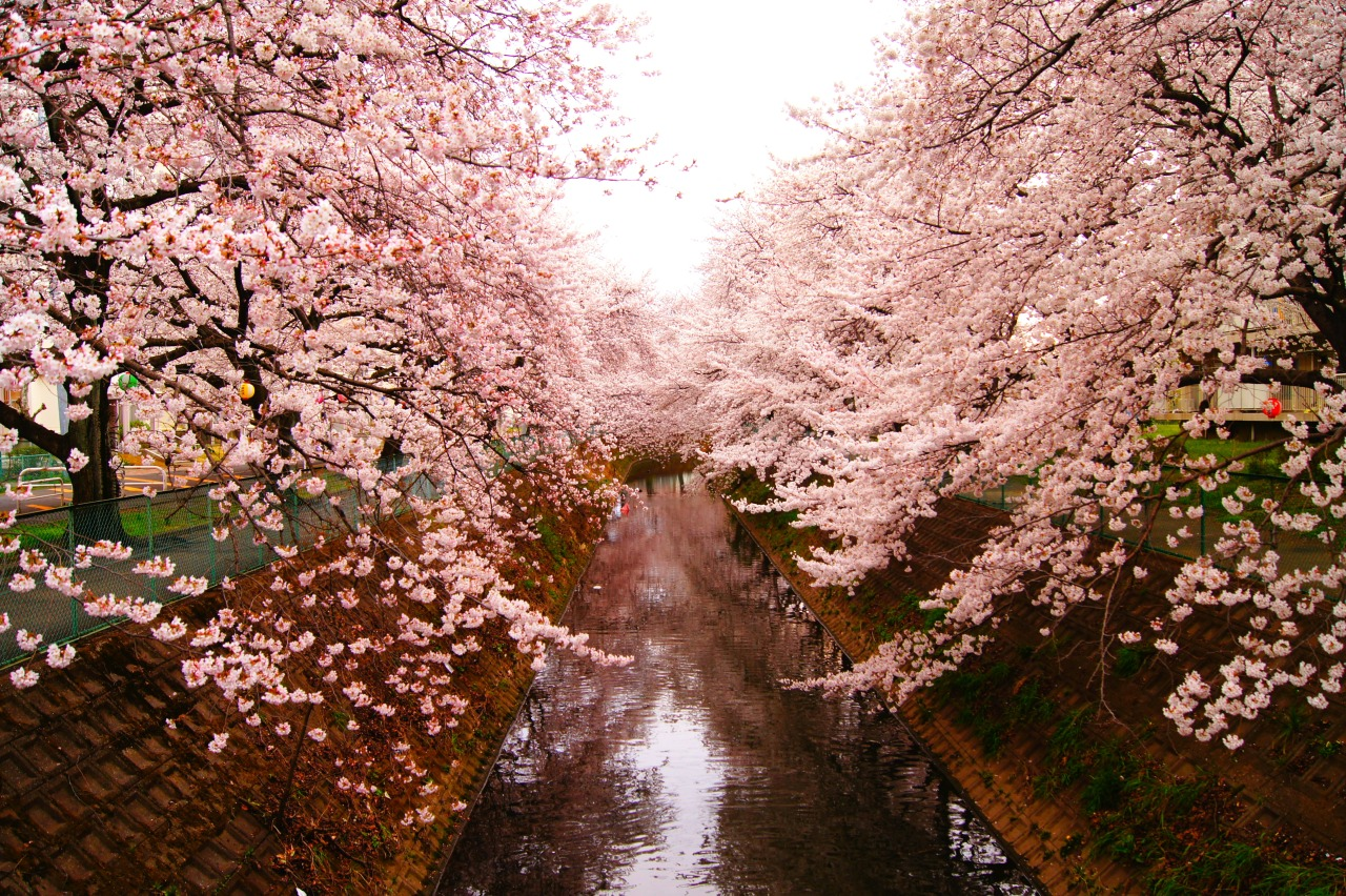 This is one of my favorite pictures from Japan last year. All the sakura in Kawagoe bloomed in early April. Seeing all the sakura blooming here in Salem reminds me of Japan.
