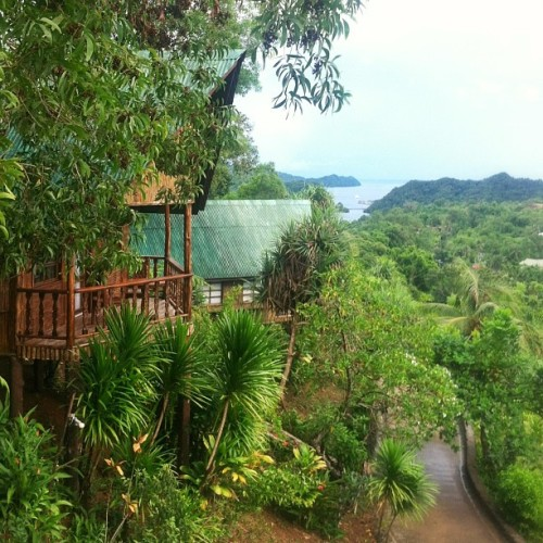 treehouse livin' #thetropics #rainyday #palau