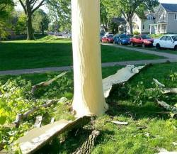 mothernaturenetwork:  Lightning strike blows bark off tree Check out the results of a stormy encounter between lightning and the hapless tree it used to find a path to the ground.