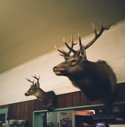 outofreception:  Mounts in the Washougal Mercantile.