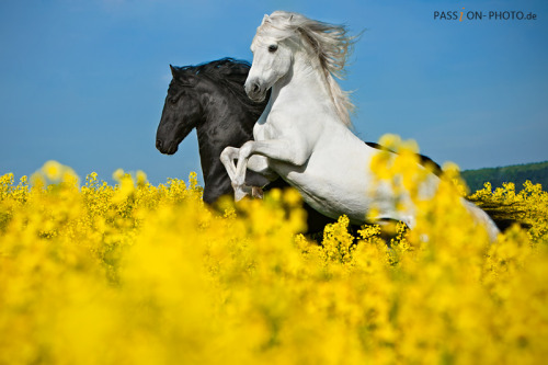 theequus:  Pegasus! by ~PASSiON—PHOTO