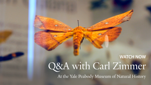 yaleuniversity:  Science writer Carl Zimmer '87 answers your questions - submitted via the Yale Tumblr Ask Box - about everything from Jurassic Park to life on Mars, and beyond! VIDEO: http://youtu.be/-7ZYWQI6Hcg.  I'm famous! Forgive me, I'm a little excited, my question was featured in this video!  It's number 6 out of 7, so you have to watch the three minutes or so leading up… but it's no chore!  Carl Zimmer is unassuming and charming, and handles the questions beautifully. Thanks to the yaleuniversity tumblr for the opportunity!
