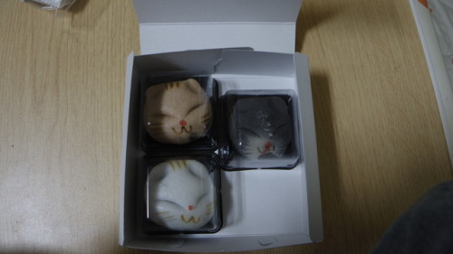 フード japanese food manju red bean paste anko dessert sweets cat cute kawaii あんこ