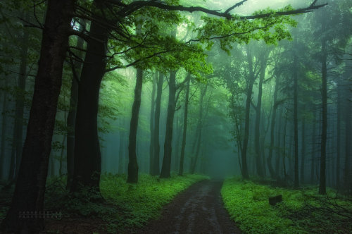 xusa4life:  -Secrecy of transformation- by *Janek-Sedlar