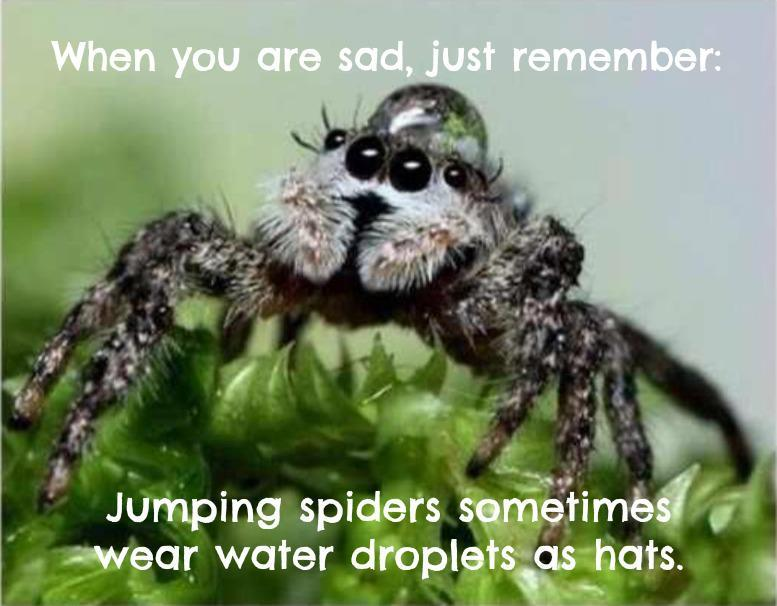 """When you are sad, just remember: jumping spiders sometimes wear water droplets as hats"" Photo credit: Kezdaman"