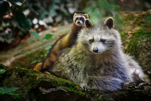 animalgazing:  2friends by Stefan Betz