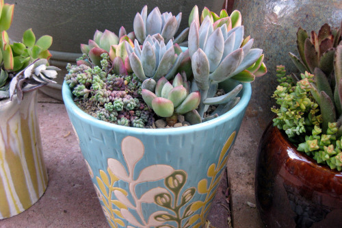 beyondthewater:  plantbodies:  flora-file: More new pots (by sdaen2006)  🌸