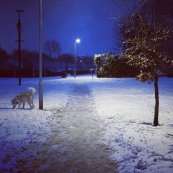 #snow ❄                        walk in the #park with the #dog #night