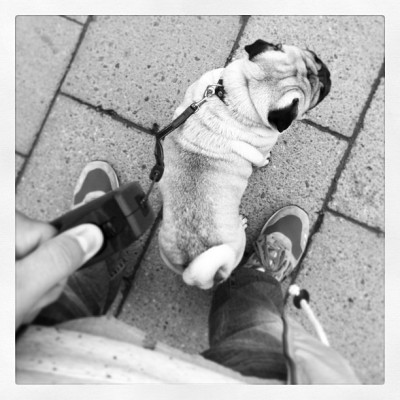 New best friend #bff #pet #pug #mini #dog #stroll #downtown #leash #staysafe #killer #asics #mansbestfriend #animal #stockholm