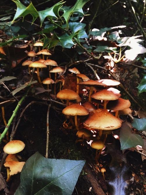 mine mushrooms forest forestblr enchanted forest nature nature blog natureblr witchblr autumn vibes autumnblr