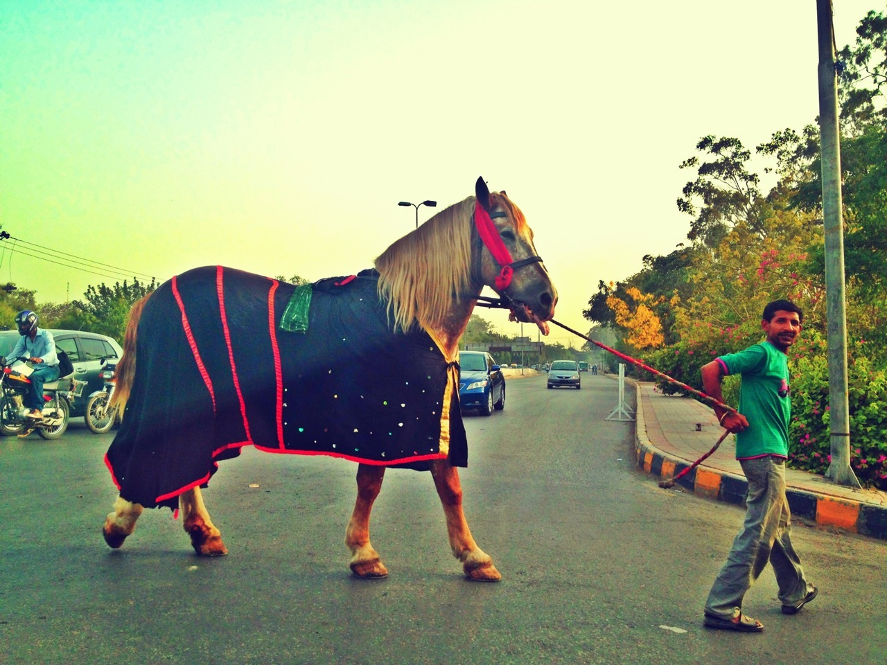 Horse on the street. Lahore, Pakistan