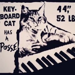 #keyboard #cat #has #a #posse