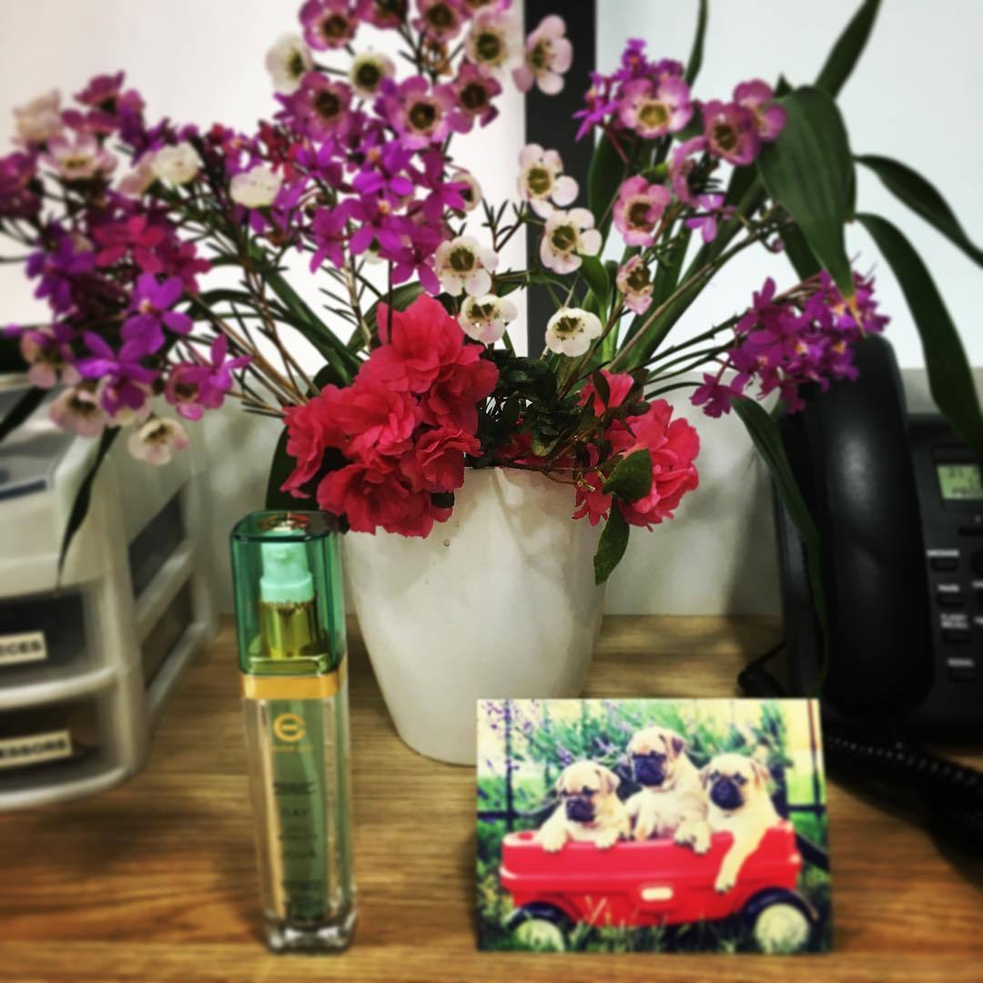 'Doc this is for you to cure Monday-itis'! Certainly a great way to start the week :) 🌹🌻 #monday #mondayblues #flowers #floral #pretty #pink #red #pugs #dogs #card #thankyou #cream #daycream #elizabethgrant #healthpromotion #stayhealthy #gplife...