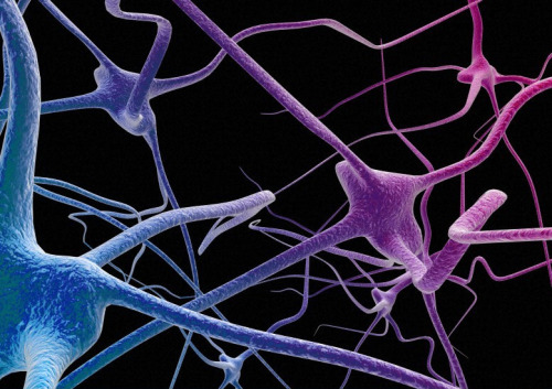 thenewenlightenmentage:  Complex Brain Function Depends on Flexibility Neurons that can multitask greatly enhance the brain's computational power, study finds. Over the past few decades, neuroscientists have made much progress in mapping the brain by deciphering the functions of individual neurons that perform very specific tasks, such as recognizing the location or color of an object.  Continue Reading