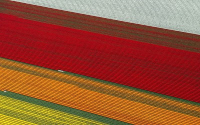 Aerial shots of tulip fields in the Netherlands — by Normann Szkop.