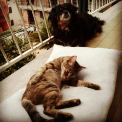 """La quiete dopo la tempesta"" ieri hanno litigato.. #cat #dog #instagram #instalove #instapic #lovecat #love #relax #soft #kitty #sweety"