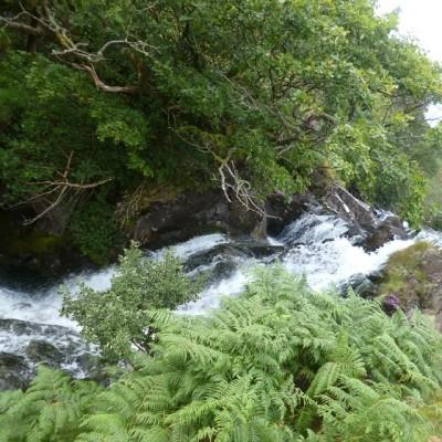 Sub tropical Wales! #Snowdonia #wales #waterfall #nature #woodland #snpwdon #watkinpath