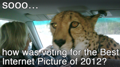 ANSWER THE CHEETAH.