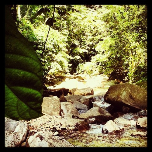 Hidden treasure! #river #adventour #tropic #tropical #iphone4 #instagram #iphone4only #instagrammer #iphoneography #picoftheday #photooftheday #pic #photo #scenery #sungailepoh #flora #forest #hutan #hiking #hululangat #jungle #landscape #myplace #malaysia #myinstag #masyaallah #instagrammalaysia #waterfall #wonderful #wow #nature #sungai #treasure #trekking