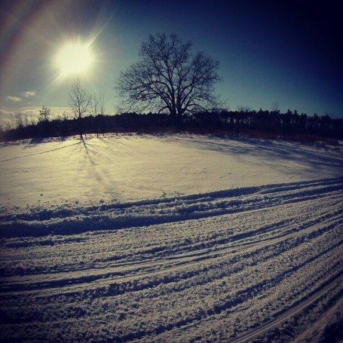 """Out for a cruise"" #afternoon #riding #snowmobiling #gopro #goprolife #goprophotography #snow #field #tree #sun #sledtracks #goprohero3whiteedition #filter #XPro #followme #please"