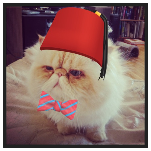wear a fez now  Fezzes are cool Fezzes Are Cool Cat