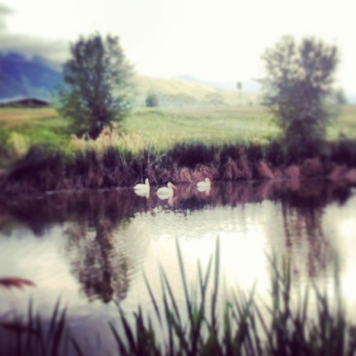 LOOK RYAN! IT'S A PELICAN!!! @jaredgu3 #wilfred #elijahwood #kaysville #utah #Sunday #greatoutdoors #pelicans