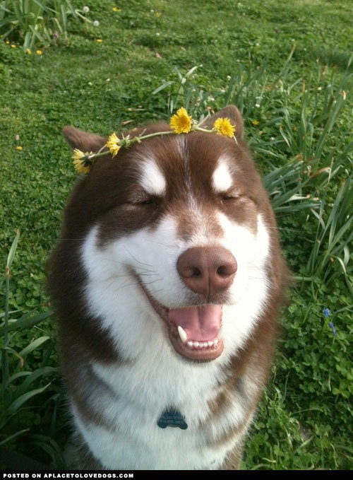 aplacetolovedogs:  She's such a princess! A beautiful one at that! For more cute dogs and puppies