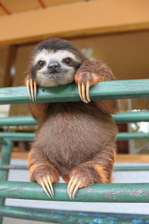 "My version of a ""hang in there"" poster…with 100% more sloths."