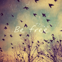 you-and-i-we-were-born-to-die28:  Be free <3
