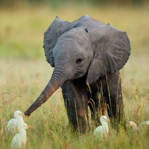 9gag:  Little elephant making friends 🐘