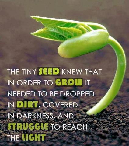 New Post has been published on http://www.motivationblog.org/tiny-seed-knew/