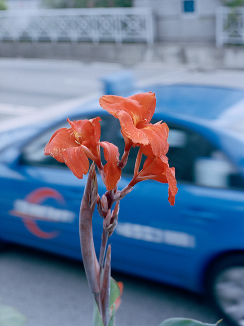 Red Flower & Blue Taxi, Singapore, 2013