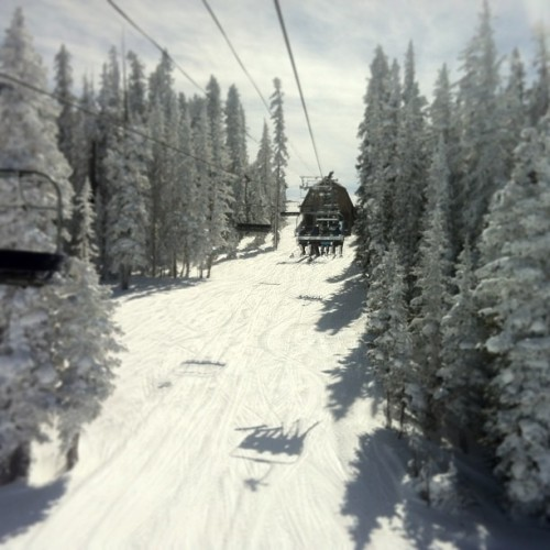 Epic day in #Vail #colorado #snow #trees #skiing #snowboard #sun  (at Vail Ski Resort)