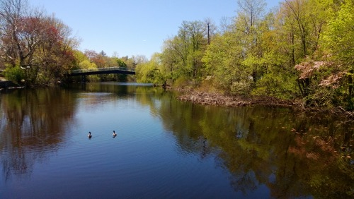 My secret lunch spot on the Charles. Work ain't half bad…