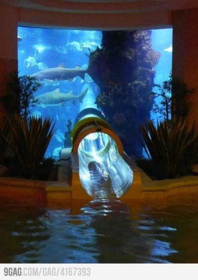 A water slide through an aquarium with sharks! At Las Vegas's The Golden Nugget