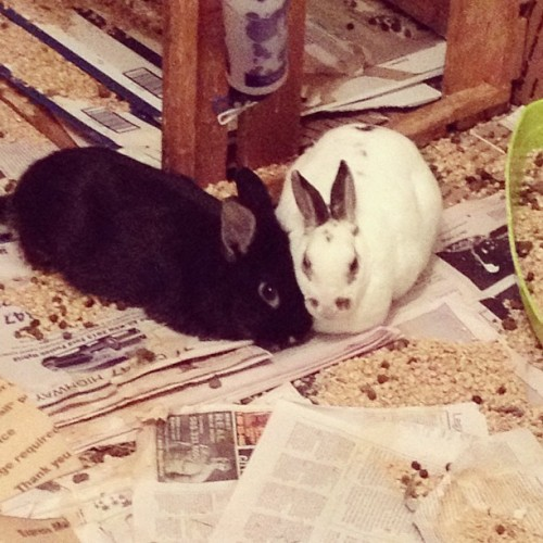 Snuggles #rabbit #bunny #bunniesofinstagram #cute#adorable#animals