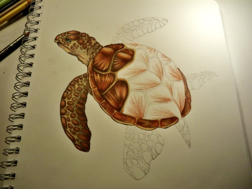 Turtle progress.