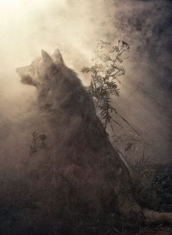 wolf fantasy wolves fantasy art wolf art wolf painting fantasy concept art fantasy digital painting