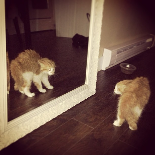 Somebody doesn't seem impressed with his own reflection.