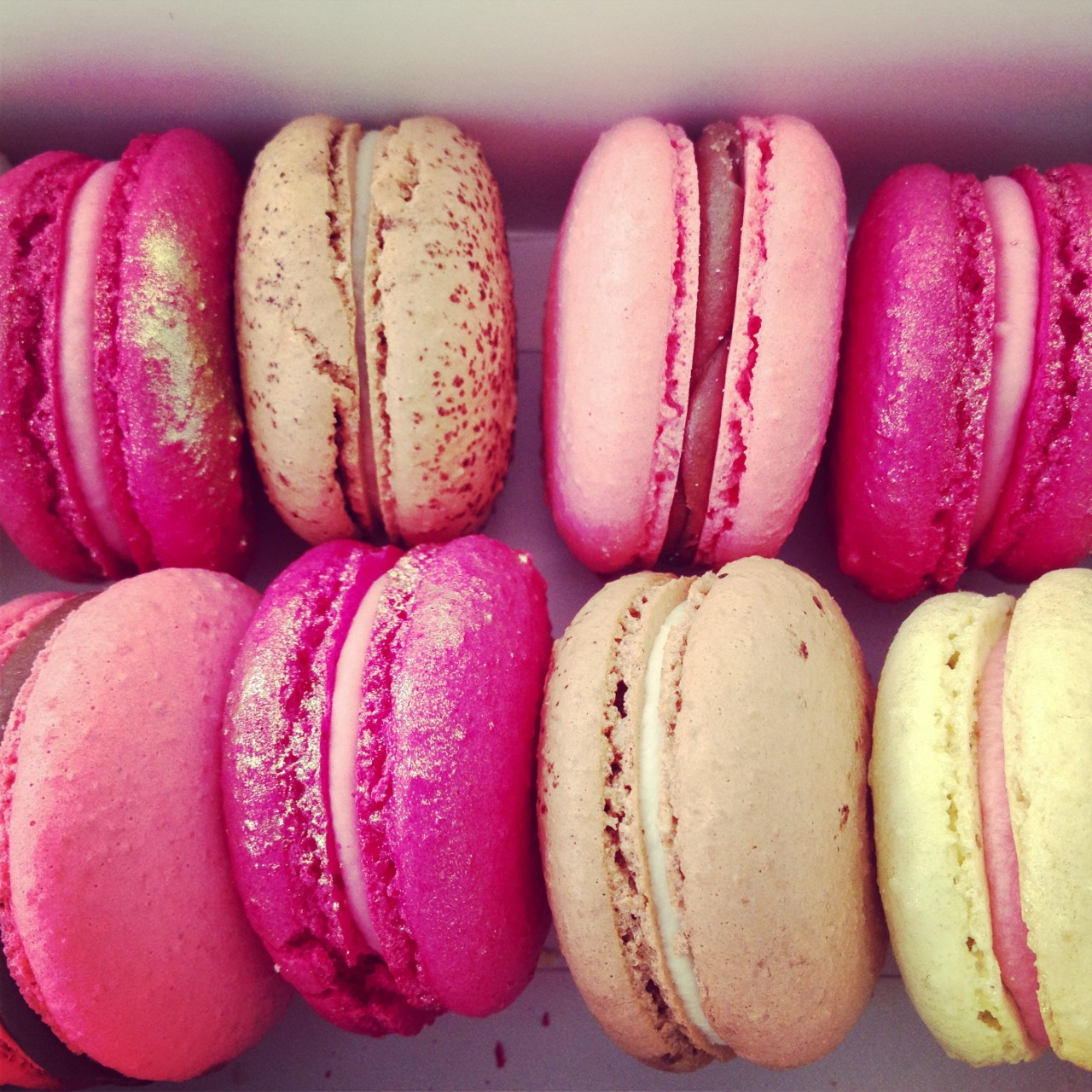 lily-cats:  Got this amazing macarons this morning!