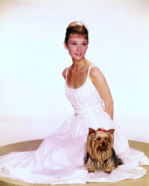 "sparklejamesysparkle:  ""Technicolor Tuesday"": Audrey Hepburn and her beloved  Yorkshire Terrier ""Mr. Famous"", 1961."
